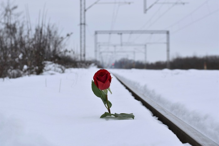 red-rose-in-snow-3183739_1280